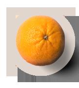 citricos-3
